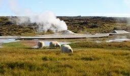 Island für Naturfreunde