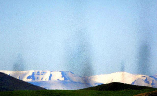 Die Mücken des Mývatn im Nordosten Islands
