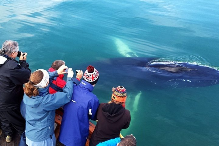 Walbeobachtung in Island – aber wo?